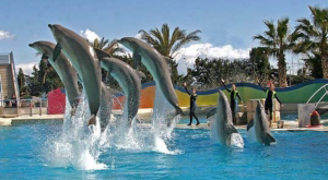 Spectacle dauphin - Marineland Antibes